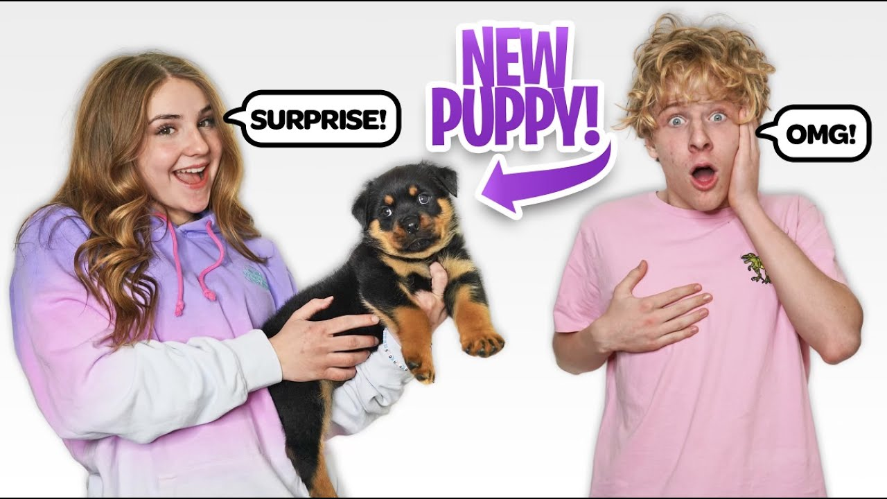 SURPRISING MY BOYFRIEND WITH A NEW PUPPY **Cute**🐶🎉| Piper Rockelle