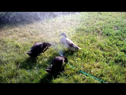 21. Playing in the Sprinkler