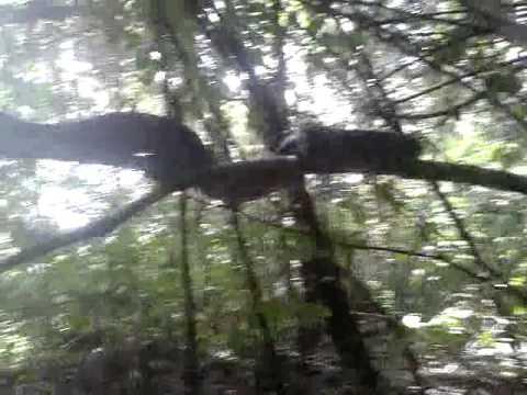 Parque Nacional Corcovado, tour.