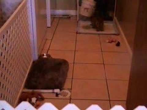 Dog eats own poop