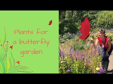 Grow a Butterfly Garden with butterfly attracting plants & flowers // The Gardenettes