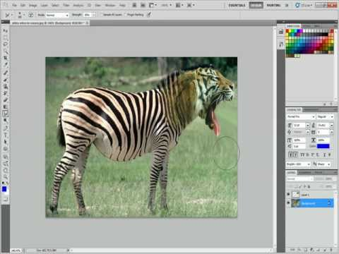 Photoshop CS5 how to combine the textures of a zebra and a tiger
