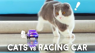 Cats vs Racing Car