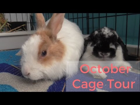 October cage tour