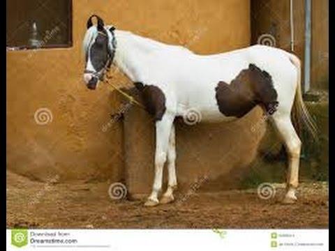 Xxx Mp4 घोड़ी के किया ऐसा काम देखे ये वीडियो Horse Story 3gp Sex