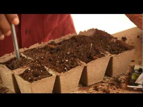 How To Start Garden Seeds Indoors