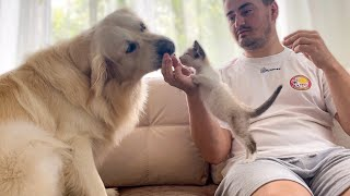 The first attempts to make friends a Dog and a Kitten