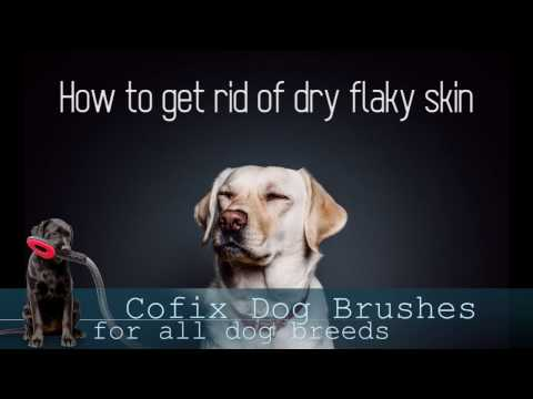 Dog Dandruff: Fast solution to get rid of dry flaky skin!