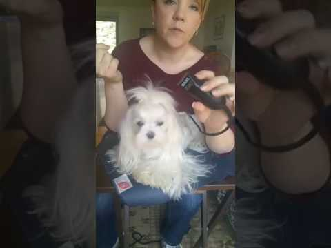 ✂ Maltese Dog Grooming for Beginners - Grooming the Face and Feet ✂