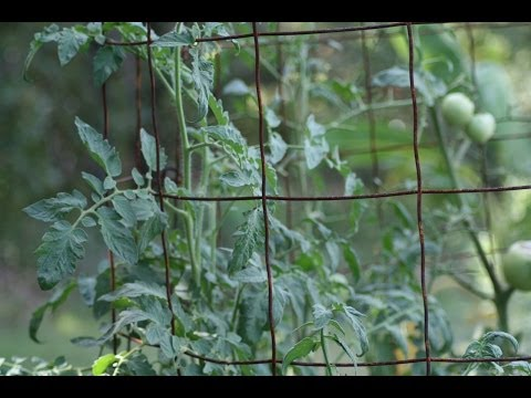 How To Make The World's BEST Tomato Cages