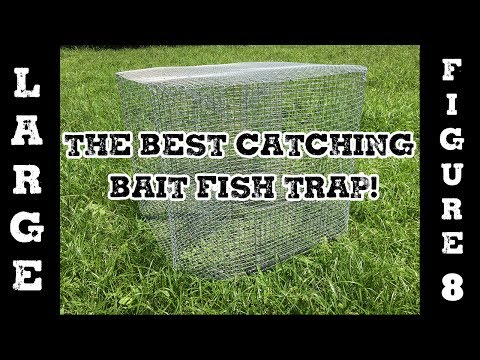Fish Trap - LARGE Fig 8 Perch Trap or Bait Fish Trap