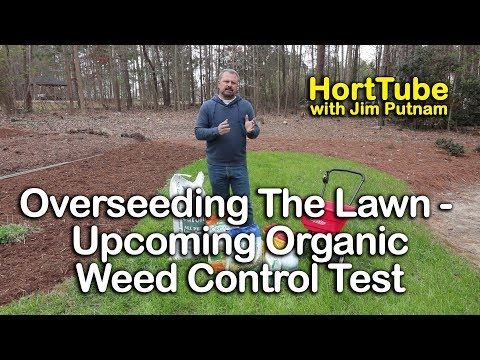 Overseeding and Fertilizing The Lawn - Upcoming Organic Weed Control Test