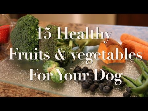 15 Fruits and Vegetables you can feed your dog