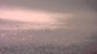 Stags rutting in the mist, Duchess Wood, Richmond Park, London