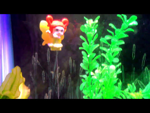 DIY :: How to feed egg yolk to fish fry, Without making aquarium dirty!!! (Gve thm a Healthy Treat)