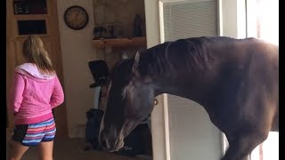 Horse comes inside house to chill with owner