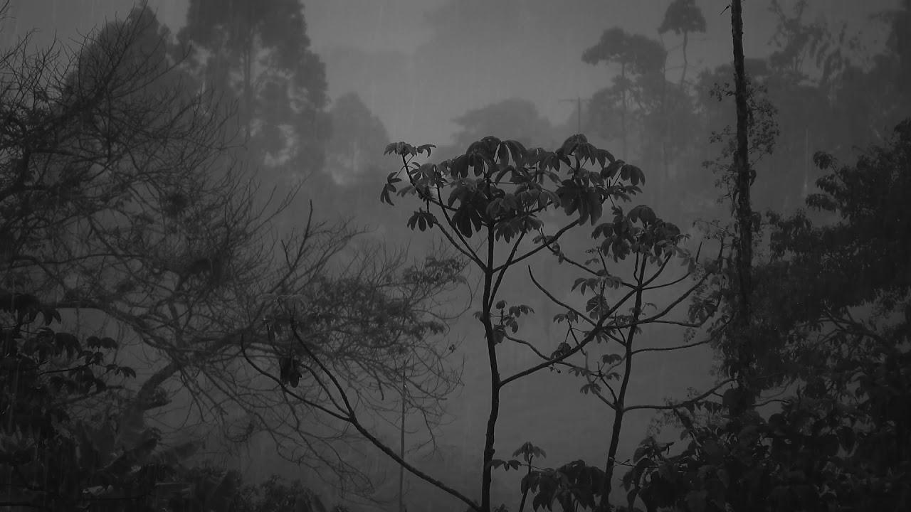 Regen & Gewittergeräusche, Natur & Regengeräusche zum Entspannen, Meditieren, Lernen & Einschlafen