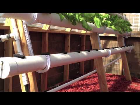 Keeping Your Hydroponic Plants Cool