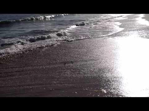 California Shore Birds Dodging Waves