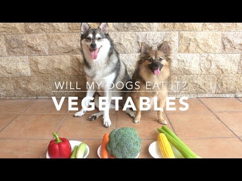 WILL MY DOGS EAT IT? - VEGETABLES