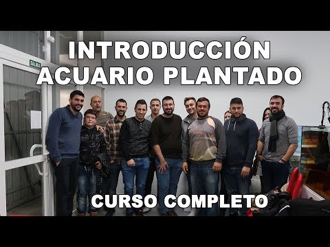 Curso introducción acuario plantado    Animalandia Club