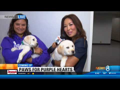 CBS 8 Teases Grand Opening of Paws for Purple Hearts San Diego Facility