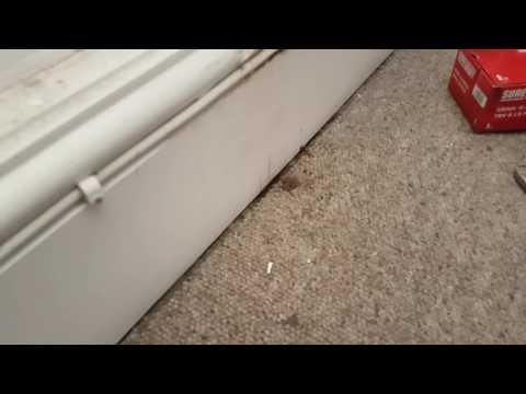 Remove radiator sludge stain from carpet