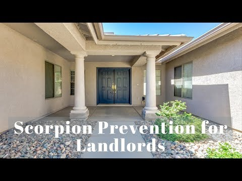 Scorpion Prevention Tips for Landlords – Property Management Phoenix