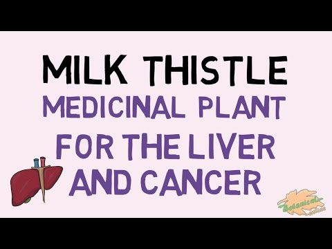 MILK THISTLE - Benefits for liver and cancer
