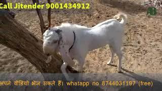 AB Farms Videos - PakVim net HD Vdieos Portal
