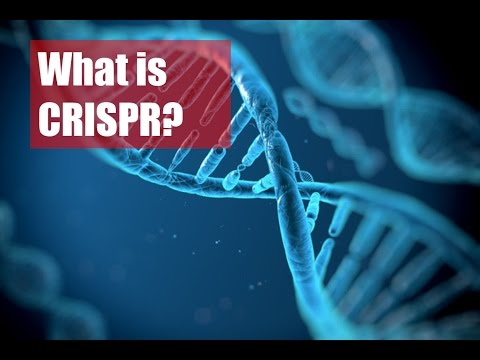 CRISPR: Monster or Miracle?