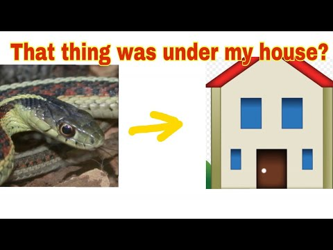 Garter snake under my house???🐍 (catch and release)
