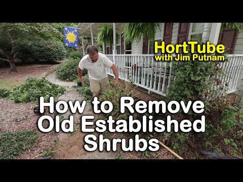 How to Remove Old Established Shrubs (Digging Out Well Anchored Plants)