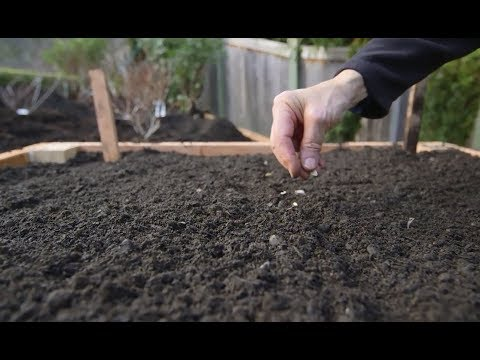 Spring Landscape Prep: Building A Raised Urban Garden