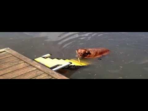 WAG Boarding Steps™ Model DM-12 Dog Dock Ramp