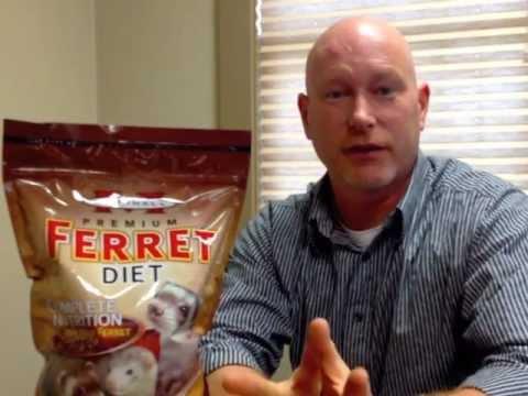 Ferret Food - Marshall Premium Ferret Diet
