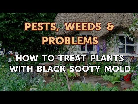 How to Treat Plants With Black Sooty Mold