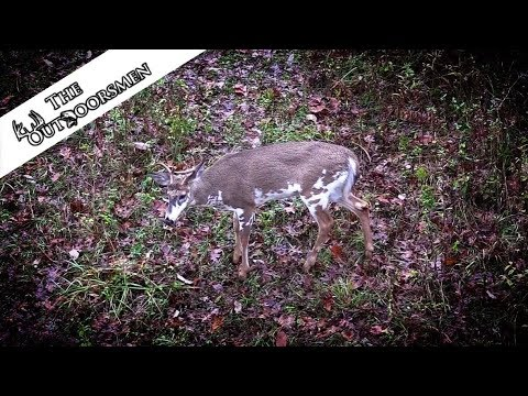 Bow Hunting Whitetails During The Kentucky Rut Leads To PIEBALD BUCK ENCOUNTER - The Outdoorsmen