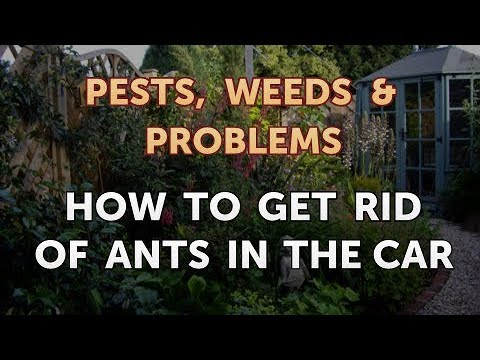 How to Get Rid of Ants in the Car