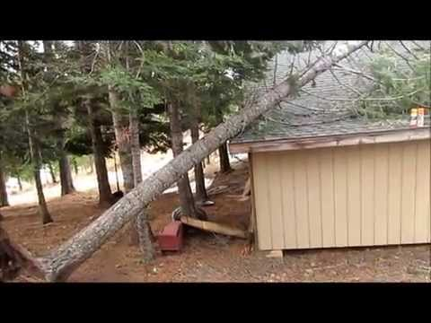 Tree falls on garage