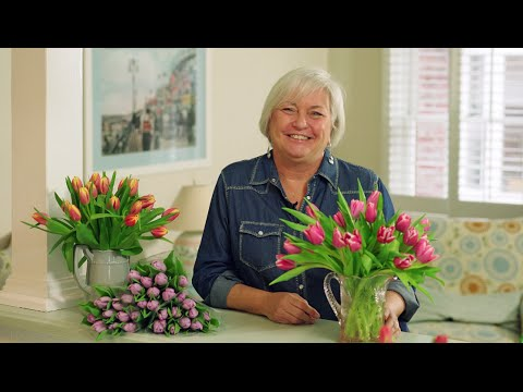 Tulip Care & Tips