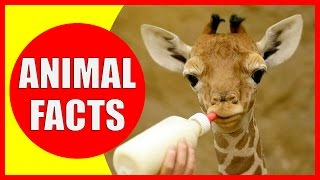 99 Interesting Facts About Animals That Will Make You Smarter | Animal Facts by Kiddopedia