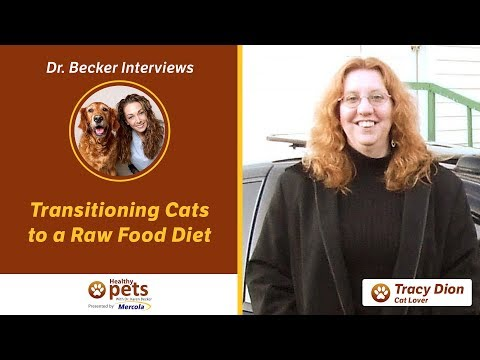 Dr. Becker Interviews Tracy Dion About Transitioning Cats to a Raw Food Diet