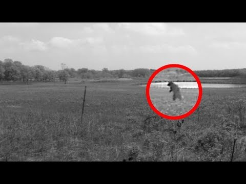 The West Virginia Sheepsquatch | Mysterious Giant Cryptid