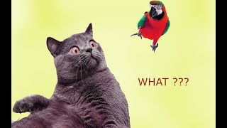 Parrots Annoying Cats - Leave Me Alone