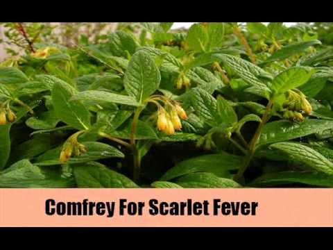 7 Simple And Effective Herbal Remedies For Scarlet Fever