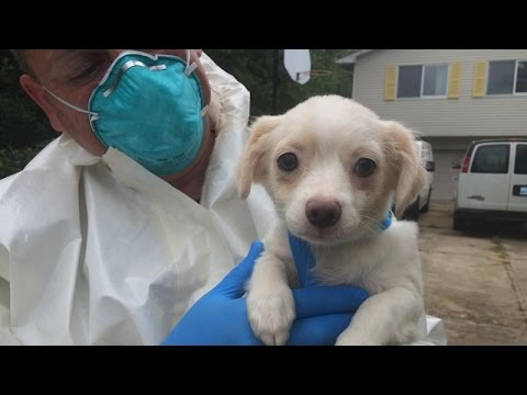 Authorities Rescue 276 Dogs From A Home In New Jersey