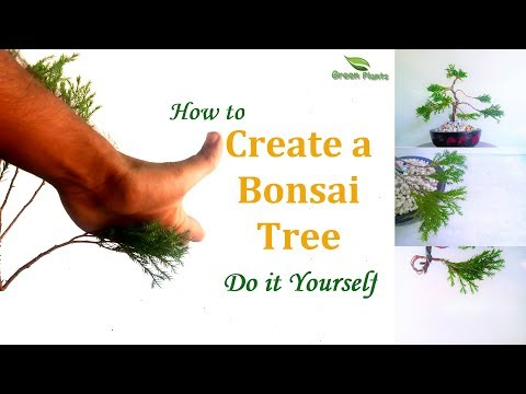 How to create a Bonsai tree at Home | Bonsai Trees for Beginners | Do It Yourself //GREEN PLANTS