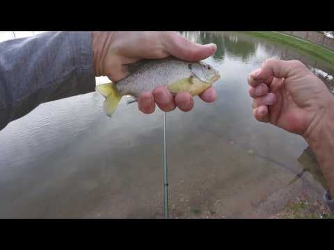 Tenkara fishing at Heroes Pond-Lots of Bluegill and Trout!