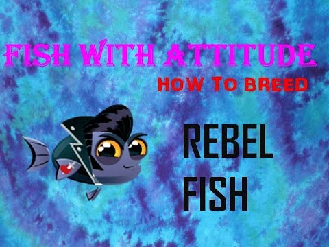 Fish With Attitude: How to breed the Rebel Fish